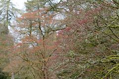 Beech trees at Westonbirt Arboretum (Mark at Magdalen) Tags: trees england plants unitedkingdom places gloucestershire westonbirt gb