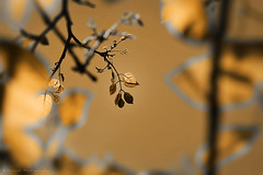 Simple is Beautiful (Suresh Photography) Tags: india tree nature colors leaf nikon chennai suresh tamilnadu d5300 sureshphotography sureshcprog
