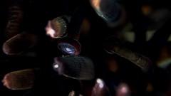 P5289317 (Jeannot Kuenzel) Tags: leica blue sea macro water port photography mediterranean underwater alien under deep scuba diving olympus malta zen supermacro moods asph f28 45mm underwaterworld s2000 dg 240z underwaterphotography extrememacro ois jeannot inon macroelmarit underwatercreature kuenzel z240 maltaunderwater underwatermacro underwateralien supermacrophotography ucl165 wwwjk4unet jk4u epl5 maltaunderwatermacro maltaunderwaterphotography bestmaltaunderwaterpictures maltamacro maltascubadiving underwatersupermacro jeannotkuenzel aliensofthedeepblue superextrememacro aliensofthesea