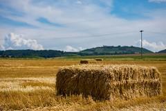 DSC_1429 (Marlon Fried) Tags: landschaft landscape stroh straw field feld acker getreide cereals
