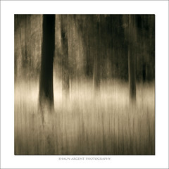Glade 2 (shaun.argent) Tags: woodland woods grasses grass glade shaunargent seasons summer trees tree texture icm mono landscapes