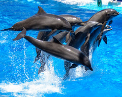 Seaworld dolphins2 (Darren Tolley) Tags: florida usa orlando