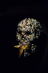 Skull by Jan Fabre (Kate Farquharson) Tags: museumofoldandnewart mona tasmania canon5dmarkiii skull beatles birds taxidermy janfabre contemporaryart