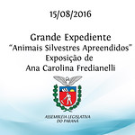 Grande Expediente - Animais Silvestres Apreendidos - Ana Carolina Fredianelli