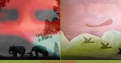 About Artificial Nature (andrefromont/fernandomort) Tags: andrfromont andrefromontfernandomort fernandomort diptych diptyque meditation mditation
