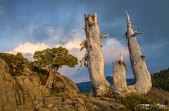 Rockin' in the Rain - El Dorado County, California (Tactile Photo | Greg Mitchell Photography) Tags: landscape soft eldoradocounty clouds bluesky carsonpass lonetree sierranevada tree california august thursday granite color pine sunset light