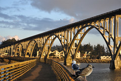 Newport OR Port-below Bridge (yeoldmenogynguide60) Tags: newport oregon large spanning bridge view fishing pier sunset panoramic panorama