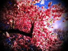 flowers light sky tree nature colors clouds spring... (Photo: Creepella Gruesome on Flickr)