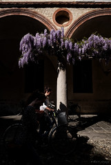 sorry but...wisteria addicted (Ilaria C. photography) Tags: street light shadow color colour bike dark fuji streetphotography nophotoshop wisteria glicine 14mm xt1 lightroomediting ilariac ilariacphotography
