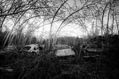 sleep. (jonathancastellino) Tags: leica trees ontario cars abandoned graveyard car forest ruins soft sleep decay ruin m foliage summicron rest wreck derelict boneyard gentle