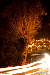 Destinos (Wilson Rodrigues / Fotgrafo - Santo Andr-SP) Tags: de jesus igreja da luzes bom pau rvore missa paranapiacaba presses simbolo mensagens destinos oraes