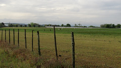Quinta da Broa - Broa Farm (Ricardo B. Salgueiro) Tags: portugal rural fence countryside farm campo cerca quinta vedao goleg