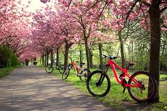 Spring. (SnailsJoe) Tags: berlin germany spring bikes mountainbikes