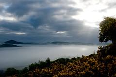Furze and fog (life thru a lunk) Tags: fog landscape spring hills sunbeams crepuscular