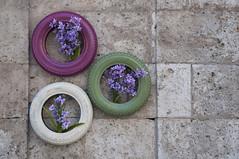 3 (Guillermo Relaño) Tags: flores color nikon valladolid tres minimalismo neumáticos d90 guillermorelaño