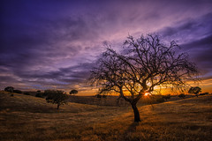 Naked (Jos M.S. Moreira) Tags: sunset tree portugal alentejo