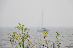 Sailing in the Mist (Infomastern) Tags: sea mist boat sailing sailingboat geolocation smygehuk geocity camera:make=canon exif:make=canon geocountry geostate exif:lens=efs18200mmf3556is exif:aperture=90 exif:isospeed=100 exif:focallength=155mm camera:model=canoneos760d exif:model=canoneos760d