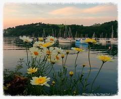 Smile, breathe, and go slowly. ~Thich Nhat Hanh (The Visual Poet) Tags: dartmouth devon sailboats tranquility riverdart estuary livinginthemoment jasonmraz sight sound peace hope