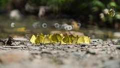 -  - Nabi Falls - Puli Township, Nantou County (prince470701) Tags:  nabifalls  butterfly               sonya99 sigma70300mm  pulitownship  nantoucounty taiwan