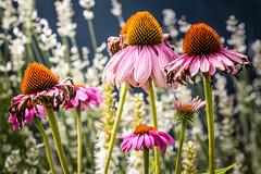 The Good, the Bad and the Ugly (Sebastian Koenig) Tags: flowers green nature sunny natur blumen garten garden ngc flickrtravelaward