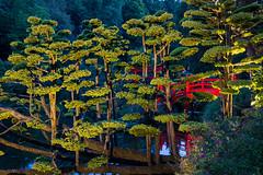 DSC05441 (regis.verger) Tags: temple zen nuit parc nocturne asiatique vgtal maulvrier