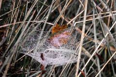 webs (guy.sasha) Tags: nature grass countryside fields webs