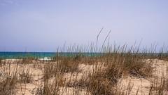 Behind the dunes (Quique CV) Tags: sea summer beach valencia mar sand mediterranean mediterraneo dunes playa arena verano dunas 2016 sueca marenydebarraquetes ilce5100