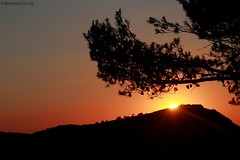 Eternal sunshine (bertrand kulik) Tags: sun montain soleil montagne contrejour nature arbre tree