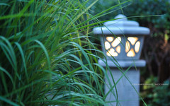 From our Garden! (peddhapati) Tags: lamp garden light green nikond90 bhaskarpeddhapati nightphotography nightlights 2016 grass composition beautiful simpleyetelegant outoffocus