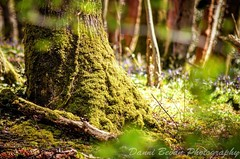Close up of moss and forest ground (dannibevan18) Tags: treetrunk miss spring bright colourful composition contrast detail landcsape nikon closeup