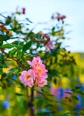 Garden light (Joni Mansikka) Tags: nature summer outdoor garden flowers leaves petals colours tuorla suomi finland tamronspaf2875mmf28xrdildasphericalif