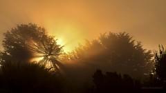 Contrallum i boirina. Explore (07/08/2016) (JESS PUIGMART i SNCHEZ) Tags: contrallum montseny raigs llum sol nikon boira fog forest foret bosque bosc lights luz rayos