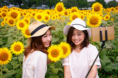 Young women taking selfie pictures with smartphone in sunflower field (Apricot Cafe) Tags: asianethnicity canonef1635mmf28liiusm japan kanagawa enjoy happiness nature outdoor refresh strawhat summer sunflower traveldestinations twopeople vacation walking weekendactivities woman youngadult zamashi kanagawaken jp img646999