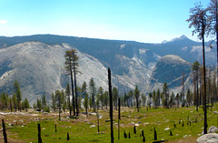 Burnt out (Lost in Flickrama) Tags: yosemite nationalpark rocks mountains landscape california hiking wildnerness pinetrees trees sky burnt meadow peaks valleys