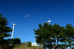 (Torasan Photography) Tags: a321 airbus aircraft airlines airport asia aviation daytime hnd haneda japan kanagawa kawasaki outdoor phillippinesairlines place rjtt structure time tokyointernationalairport transportation windmill       jp
