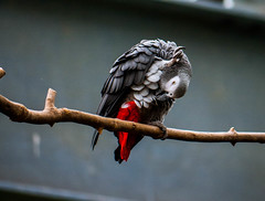 Clean me up! (Greyscale82) Tags: zoo cologne parrot kln papagei 2013