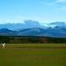 Viendo las hierbas crecer :: Seeing the grasses to grow :: En voyant les herbes croître ::: 20141207 9644