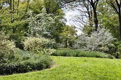 IMG_0074 (jnshaumeyer) Tags: arboretum dogwood usnationalarboretum