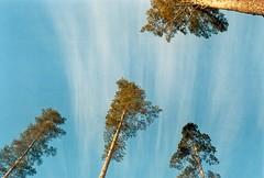 The twilight forest (venlani) Tags: old light sky film nature clouds finland grain ishootfilm filmcamera finnish filming filmphotography filmisnotdead