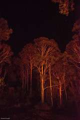 Trees and stars by the light of a bonfire. (Daniel Arnaldi) Tags: wood trees winter light orange reflection mystery night forest dark landscape fire star glow australia burning bonfire newsouthwales astronomy australasia oceania quantity physicalscience jilliby danielarnaldiphotographer stellarastronomy