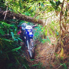 Alicia ducking the fallen trees in Cambodia's Cardamom Mountains...  http://rideexpeditions.com/motorcycle-tours/cambodia-rides/cardamom-mountain-explorer/  #dirtbikelife #trailride #asia #motorcycletour #motolife #cardamommountains #endurolife  #dirtbike (RideExpeditions) Tags: instagramapp square squareformat iphoneography uploaded:by=instagram rise