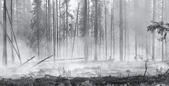 Fire Season . . . (JLS Photography - Alaska) Tags: blackandwhite bw monochrome alaska america forest landscape fire blackwhite outdoor smoke forestfire forestfloor sprucetrees alaskalandscape jlsphotographyalaska