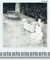 Kleinod # 003 # Polaroid SX70 folding Impossible BW600 ND-Filter - 2016 (irisisopen f/8light) Tags: irisisopen polaroid sx70 folding nd filter impossible bw600 skateistan film analog instant