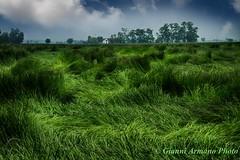 Vento di luglio (Gianni Armano) Tags: verde photo san italia nuvole foto estate campagna piemonte di campo colori gianni vento alessandria giuliano luglio nuovo 2016 armano