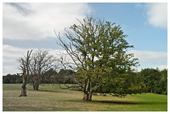 Half-Life (e27182818284) Tags: tree dry baum trocken zollernalb smcpk28mmf35