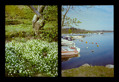 2016-04--05 - Olympus Pen EE - Kodak Ektar 100-11 (sarajoelsson) Tags: city urban color film analog pen spring diptych sweden stockholm snapshot olympus ishootfilm analogue halfframe everydaylife filmgrain vardag 2016 filmphotography penee filmisnotdead halvformat diptyk teamframkallning digitizedwithdslr