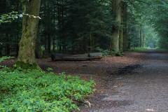 Sitzgelegenheit im Wald (GuinTheReal) Tags: dark dunkel kw292016 mist nebel wald woods