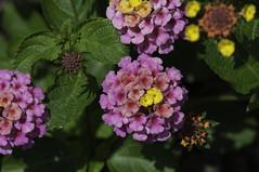 Flower_SAF9845 (sara97) Tags: flower flowering floweringplant missouri nature outdoors photobysaraannefinke saintlouis towergrovepark urbanpark copyright2016saraannefinke