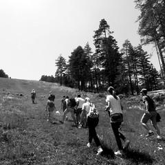 tornik (skip.to...) Tags: blackandwhite serbia zlatibor tornik nature