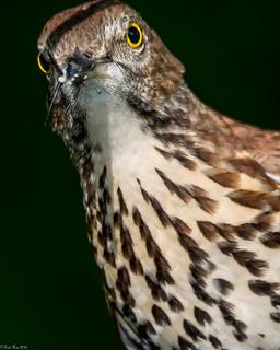 Angry bird (Explored)